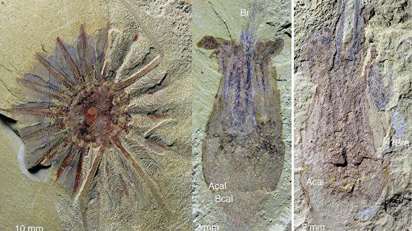 Палеонтологи нашли останки старого «ктулху» вКитае