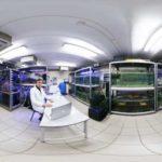 Русский научный фонд возобновил финансирование 550 научных проектов