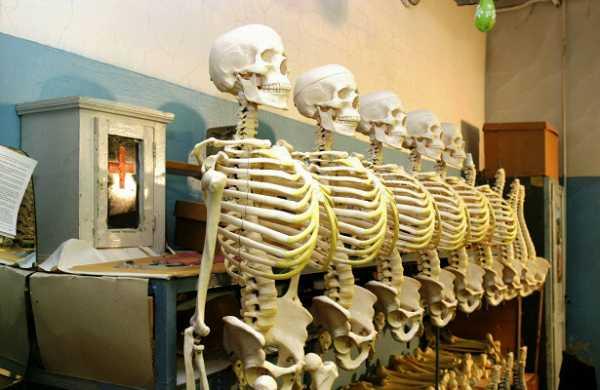 Прохожий нашел пять мешков счеловеческими останками вСанкт‐Петербурге. Видео