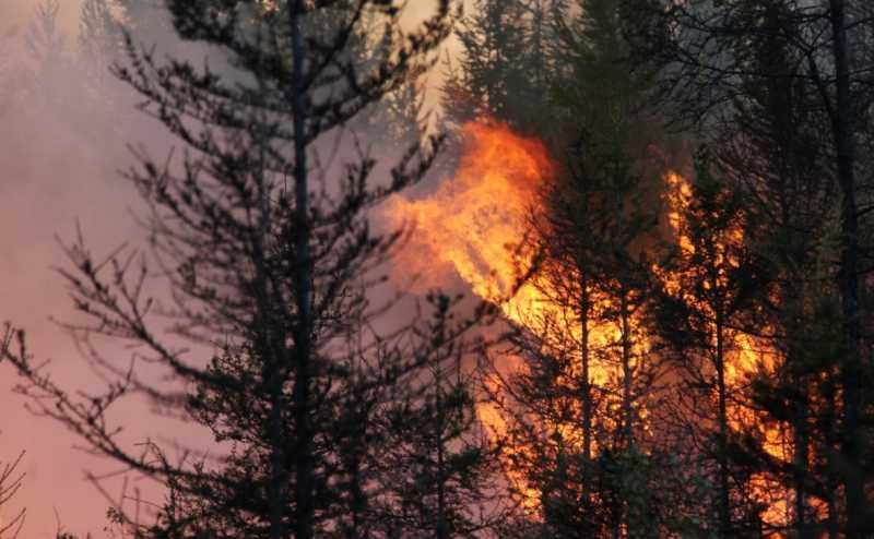 Путин поручил определить порядок изъятия земли за пожарные нарушения