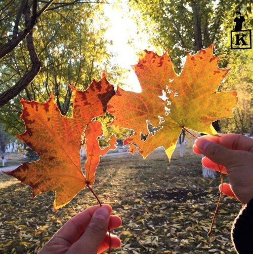 Художник дарит листьям вторую жизнь, вырезая на них силуэты (23 фото)