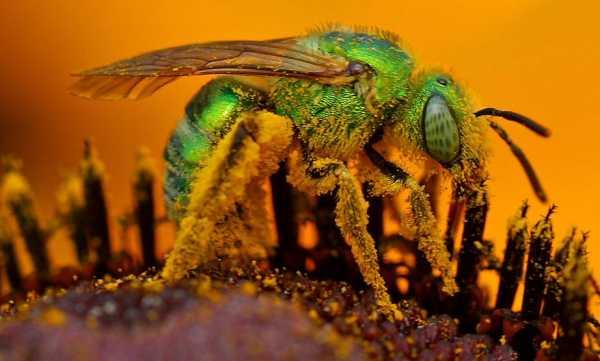 Окулисты на Тайване нашли в глазу у женщины несколько живых пчел, которые питались ее слезами! 😰