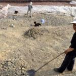 ВЕгипте обнаружили десятки мумий скошками исоколами