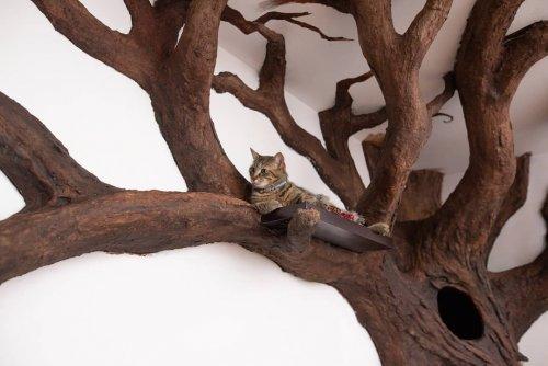 Дерево для настоящего учёного кота (7 фото)