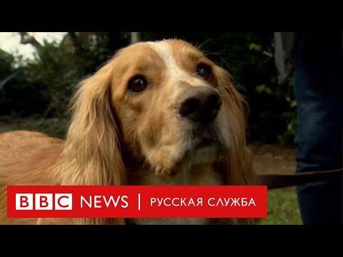 Псу спасли жизнь благодаря переливанию крови