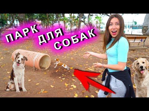 ПАРК ДЛЯ СОБАК ПЕРВАЯ РЕАКЦИЯ Собаки Джины Канары   Elli Di Pets