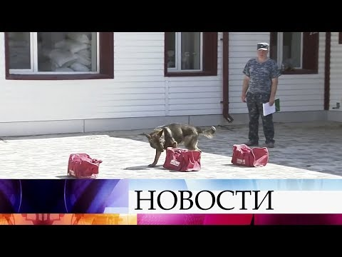 В Волгограде в эти дни проходят необычные экзамены - в полицейской кинологической службе.