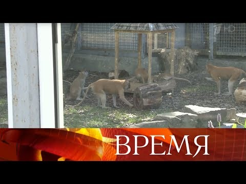 Дмитрий Медведев подписал постановление, по которому дома нельзя держать диких животных.