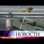 В Иркутской области ливни привели к настоящему бедствию.