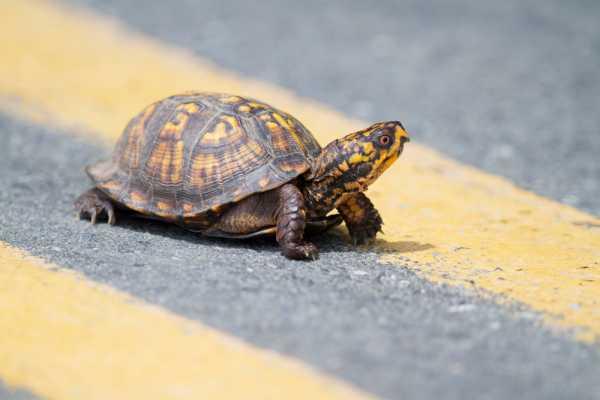Исследование: сердца черепах могут жить без кислорода несколько месяцев