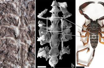 Ученые нашли самый древний вид скорпионов